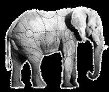 elefante transparente web